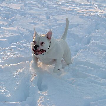 Snow Dog by dekomsyrokcih