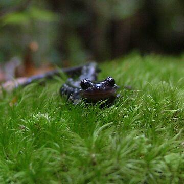 salamander by dekomsyrokcih