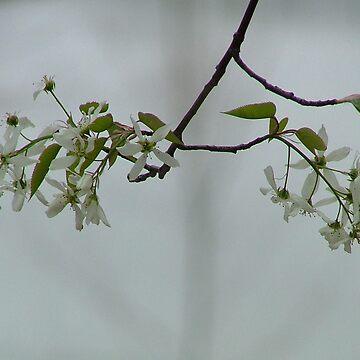 Branch Over Water by dekomsyrokcih