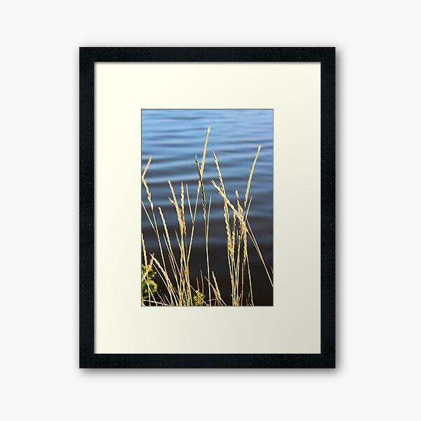 Blue seas and yellow grasses Framed Art Print