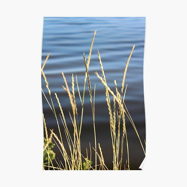Blue seas and yellow grasses Poster