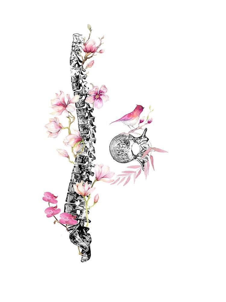 Spine with vertebra by erzebetth