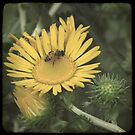 Wildflower TTV by Colleen Drew
