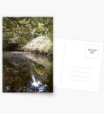 Reflections in nature Postcards