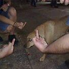 Dogs Suck by snacksbuddy