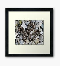 Speaks with forked tongue. Framed Print