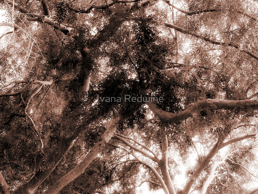 Study in Light and Dark – A Canopy of Branches in Sepia by Ivana Redwine