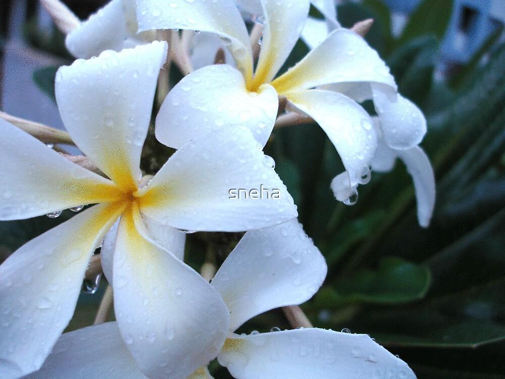flowers!! by sneha