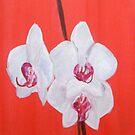 White Orchids by Shoshonan