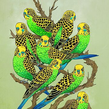Green and Gold Budgies by FireRabbit