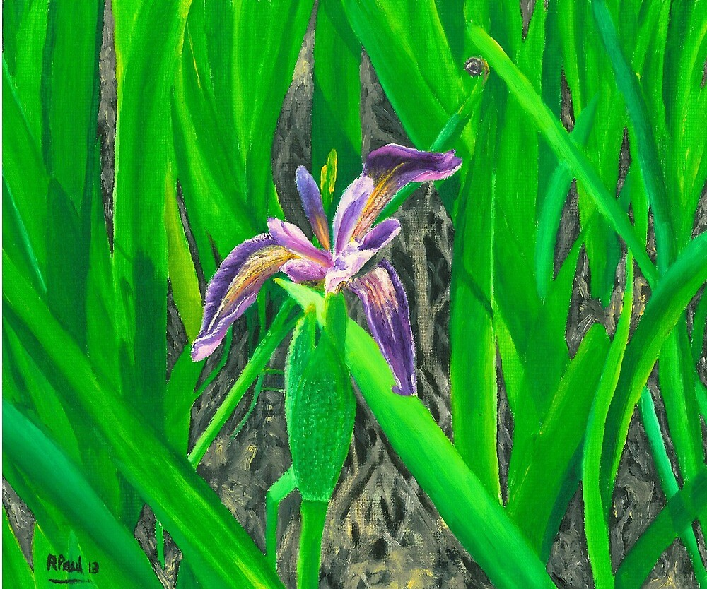 Purple Iris - Harris by Richard Paul
