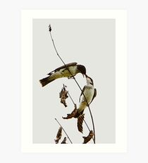 A Pair of Eastern Kingbirds Special Effects Art Print