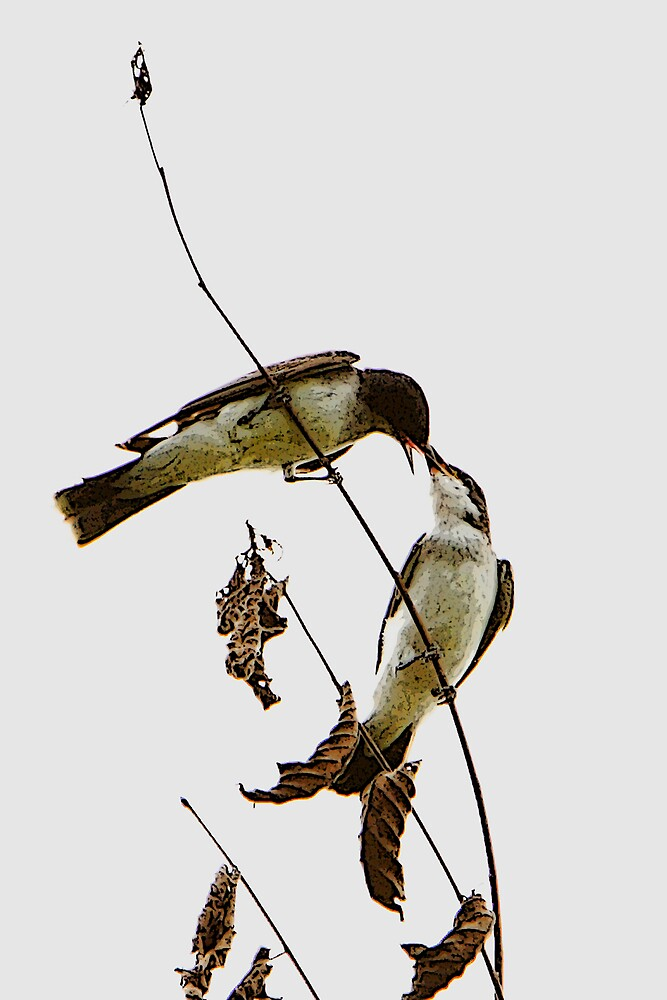 A Pair of Eastern Kingbirds Special Effects by DigitallyStill