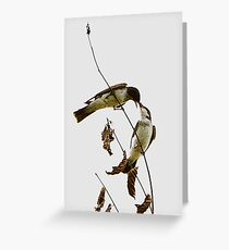 A Pair of Eastern Kingbirds Special Effects Greeting Card