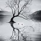That Wanaka Tree by yolanda
