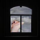 Peeping Tom Ostrich by Wayne King