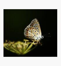 Una farfalla nel bosco Photographic Print