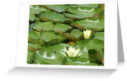 WaterLilies by Karen K Smith