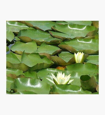 WaterLilies Photographic Print