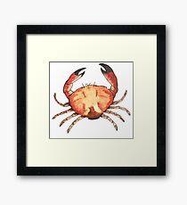 Crab: Fish of Portugal Framed Art Print