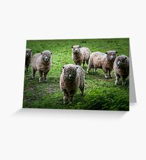 Cotswold sheep Greeting Card