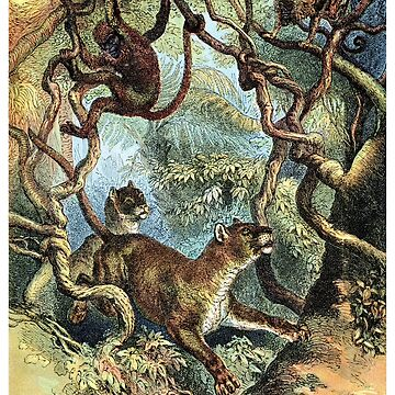 1890 Puma Chasing Monkeys by historicimage