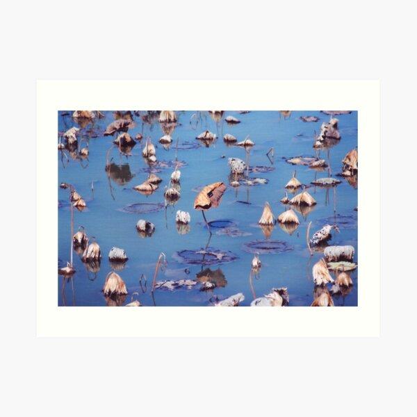 River Lotus Art Print
