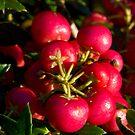 Berries by Michael Hadfield