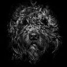 Ziggy Portrait No 1 by Brian Carson