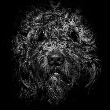 Ziggy Portrait No 1 by learningcurveca