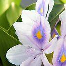 hawaiian flowers by Lisa Hildwine