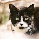 Tuxedo Feral Cat  by Chriss Pagani