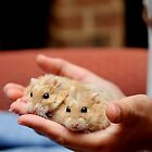 Holding Hamsters by L.D. Franklin