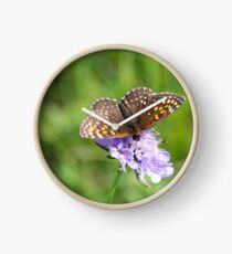 Fritillary enjoying the nectar Clock