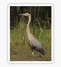 Chippewa Flowage Great Blue Heron Sticker