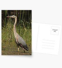 Chippewa Flowage Great Blue Heron Postcards