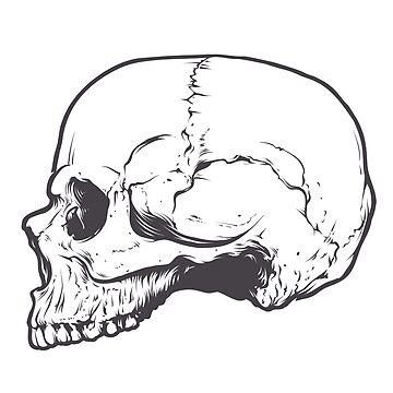 Skull - side view by Bridde21