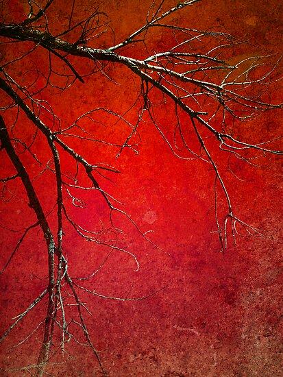 Red Morning by Tara  Turner