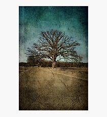 Largest Oak in Missouri Photographic Print