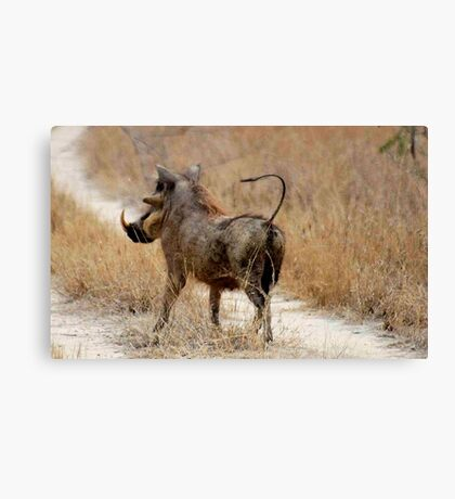 ATTITUDES OF THE WARTHOG  ! -( Phacochoerus aethiopicus) Canvas Print