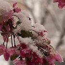 Colorado Spring by DenverCool