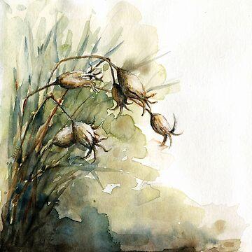 Summer Seedpods by HeidiHoHo