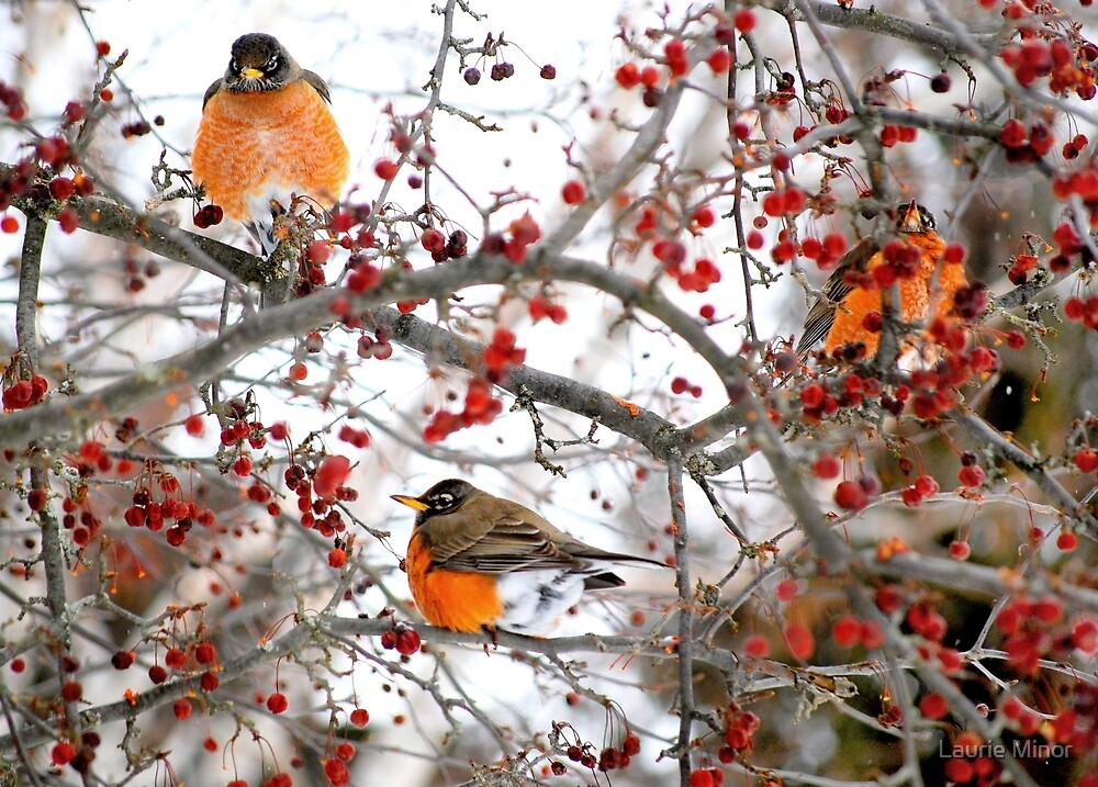 Have a berry nice day...!   :) by Laurie Minor