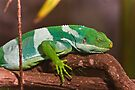 Fiji Banded Iguana by Jason Asher
