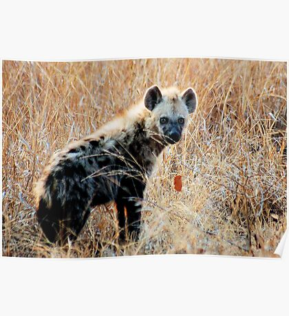 THE SPOTTED HYAENA - Powerful and treacherous... Poster