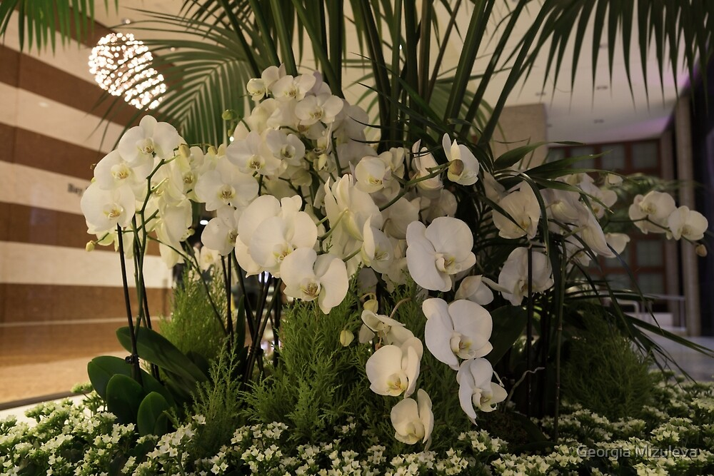 Exuberant Orchid Display by Georgia Mizuleva
