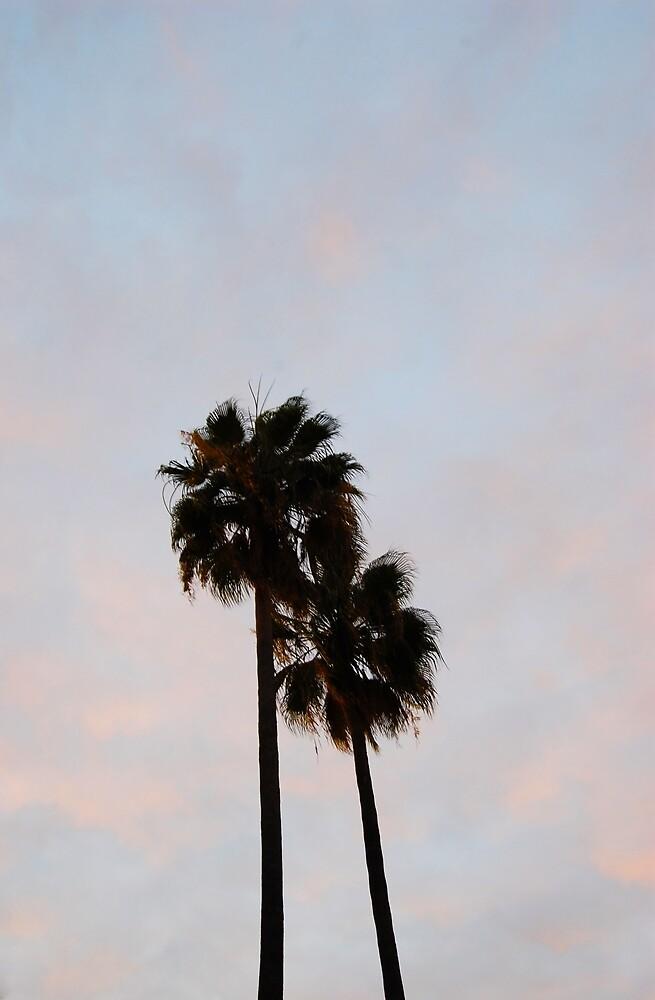 Palm Tree Cali by Rodrigo Gomez