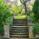 Autumn Steps by TonyCrehan