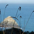 Sea Through Grass by Kimberly Miller