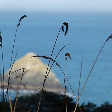 Sea Through Grass by kimberlymiller